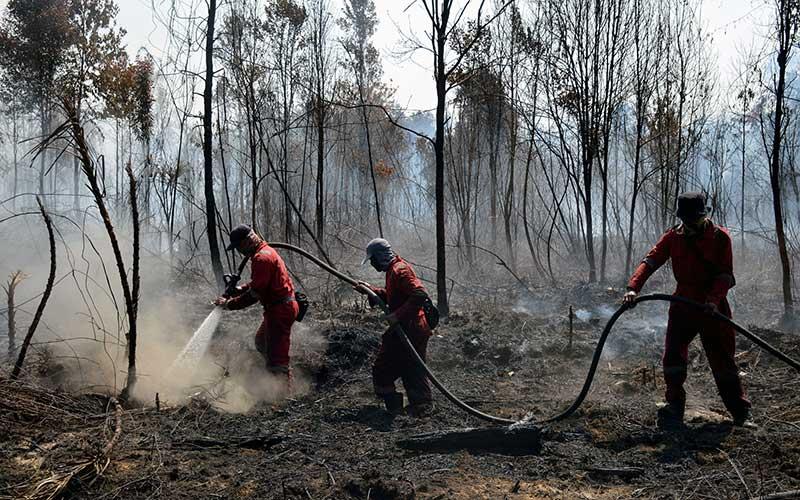 100 Hektare Lahan di Riau Terbakar Akibat Musim Kemarau