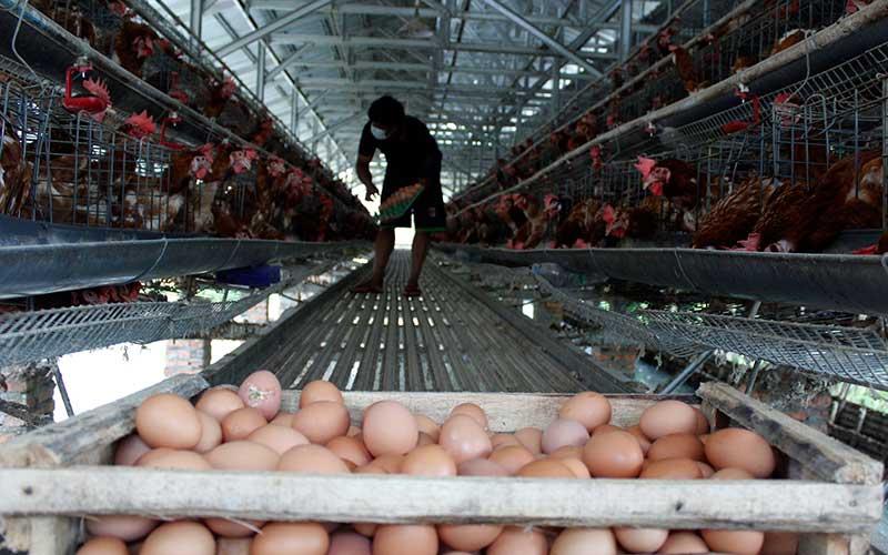 Memasuki Bulan Ramadan, Harga Telur Ayam Merangkak Naik