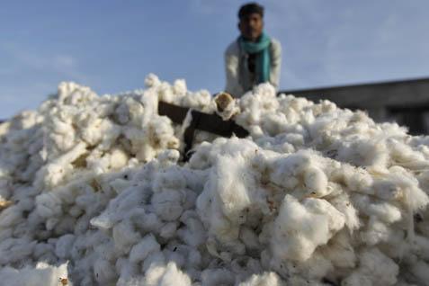 Petani tidak melirik komoditas kapas untuk dikembangkan karena secara ekonomi kalah bersaing dengan komoditas lain. - bisnis.com