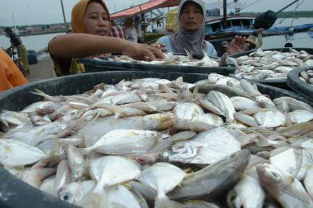 Kadin Rangkul Koperasi Loka Mina Budidayakan Ikan Bawal Bintang Ekonomi Bisnis Com