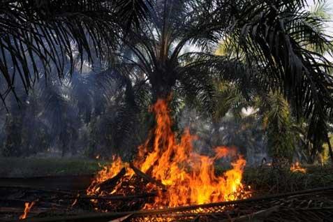 Kabupaten Kampar dan Kuantan Singingi hanya memiliki satu titik api yang berlokasi di Kecamatan Tabung dan Singingi Hilir.  - bisnis.com