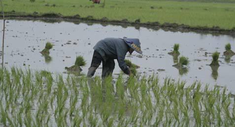 Bupati Bekasi menyodorkan rencana penetapan luas lahan pertanian abadi yang seluas 35.000 hektare, berkurang dari luas lahan pertanian saat ini seluas 51.000 hektare.  - bisnis.com