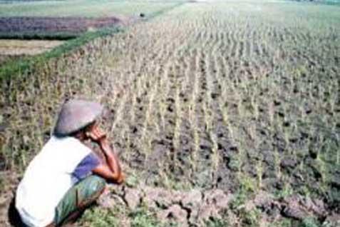 Tidak ada cetak sawah di Pantura karena lahannya memang tidak ada.  - bisnis.com
