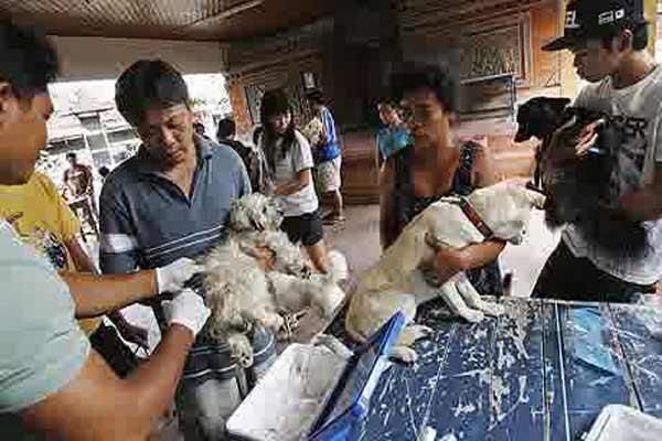 Sebanyak 90 tim yang melakukan vaksinasi rabies di delapan kabupaten dan satu kota itu sedikitnya mampu menyasar 350.000 ekor anjing.  - telegraph.co.uk