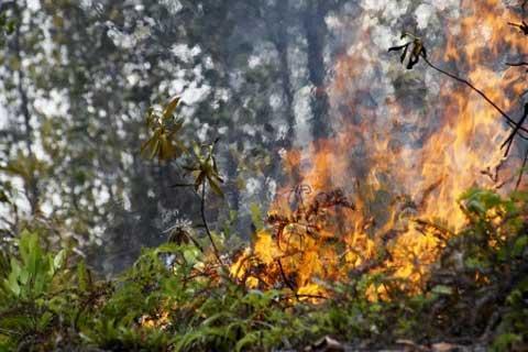Kebakaran hutan di Riau baru-baru ini - Antara