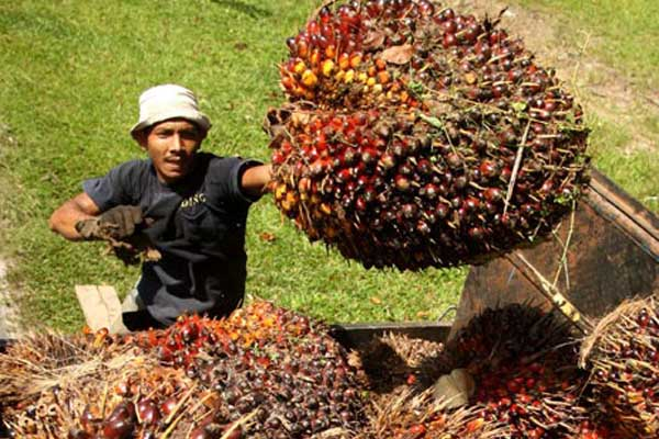Pengangkutan sawit. Ekspor CPO naik 13% - Bisnis