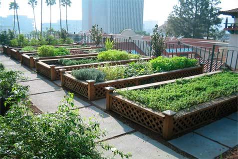 Untuk menggencarkan urban farming tidak bisa cepat karena pemilik lahan tidak bisa mengakses bibit atau menangani hama.  - urbdp598.wordpress.com
