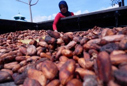 Bea masuk biji kakao 0% tidak logis - JIBI