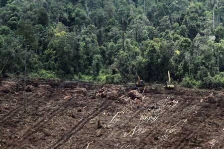 Hutan Kalimantan - Bisnis.com