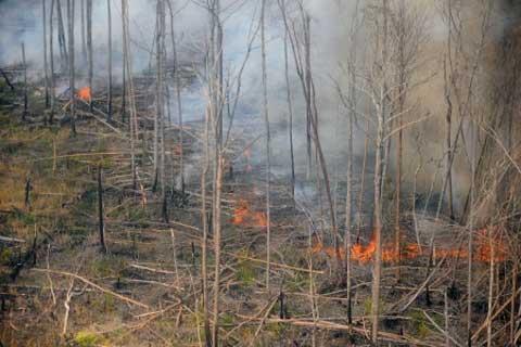 Kebakaran Hutan Riau - Bisnis
