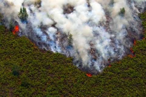 Kebakaran hutan, kabut asap, kebakaran hutan riau