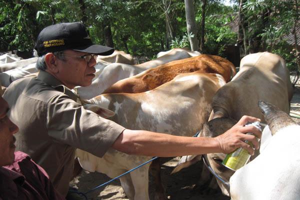 Wewenang pembibitan dan pengembangan bibit ada di pemerintah pusat melalui balai pembibitan ternak unggul (BPTU), karena terkait penyebaran di seluruh Indonesia. - bisnis.com