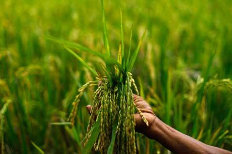 Pemerintah melakukan pendampingan dan pembinaan untuk mengembangkan tenaga trampil bidang pertanian untuk mendukung produksi.  - bisnis.com