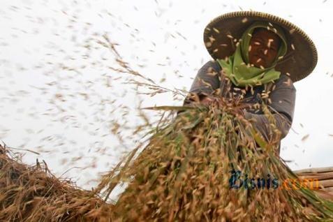 Harga beras di tingkat petani turun - JIBI