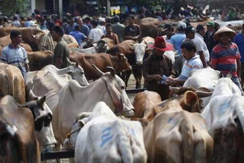 60.000 Ekor sapi NTT di bawa ke Jakarta dan Kalimantan setiap tahun - JIBI