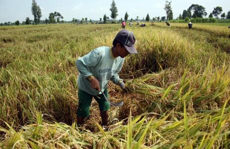 Asosiasi memperkirakan bahwa kebutuhan total petani terhadap pupuk bersubsidi adalah sebesar 9,2 juta ton, sedangkan yang dialokasikan hanya 7,4 juta ton.  - bisnis.com