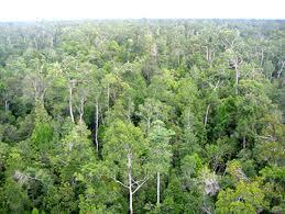 Dalam keputusan MK No. 35/PUU-X - 2012 menyebutkan hutan adat adalah hutan yang berada di wilayah adat dan bukan lagi hutan negara.
