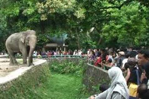 Suasana kebun binatang Ragunan.  -