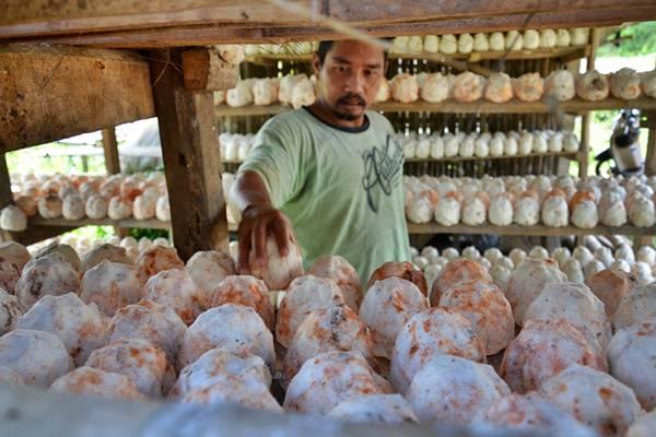 Pekerja menjemur pati singkong sebelum diolah menjadi tepung tapioka di industri rumahan Desa Cipambuan, Babakan Madang, Kabupaten Bogor, Jawa Barat, Minggu (5/2). Tepung tapioka yang dihasilkan tersebut dijual seharga Rp 10.000 per kg dan dipasarkan ke pasar-pasar tradisional dan pabrik sebagai campuran pembuatan roti dan kue. - Antara/Indrianto Eko Suwarso