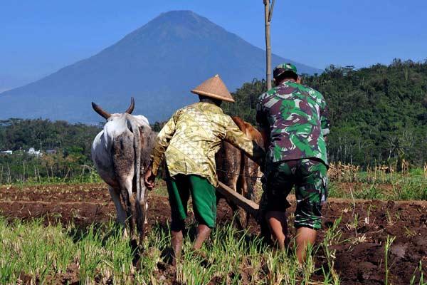 Anggota Babinsa diterjunkan guna membantu dan mendampingi petani untuk mewujudkan program swasembada pangan.  - ANTARA