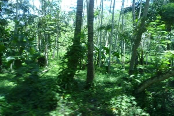 Ilustrasi hutan - wikipedia