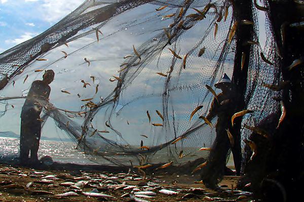 Nelayan melepaskan ikan dari pukat darat, di Pantai Kampung Jawa, Banda Aceh, Aceh, Jumat (21/4). - Antara/Ampelsa