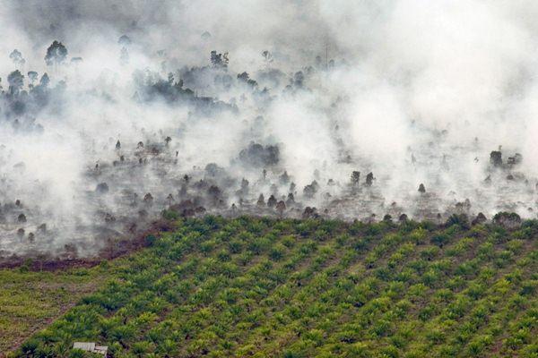 Kebakaran terjadi tidak jauh dari area perkebunan kelapa sawit di Kecamatan Tanah Putih Kabupaten Rokan Hilir, Provinsi Riau, Selasa (21/2). - Antara/FB Anggoro