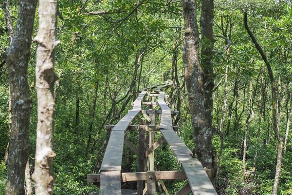 Kawasan Konservasi Mangrove - Indonesia Travel