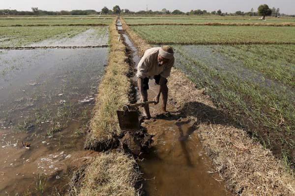 Ilustrasi petani - Reuters/Amit Dave