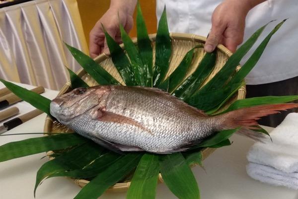 Ikan Tai, simbol kebahagiaan dan kemakmuran masyarakat Jepang. - Ilustrasi/medcom.id