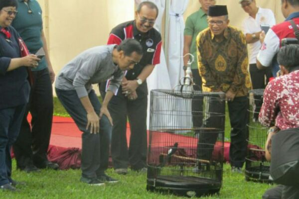 Presiden Joko Widodo memperhatikan Burung Muarai Batu milik Ade dari Brebes, Jawa Tengah, yang memenangkan lomba kicau Piala Presiden di Kebon Raya Bogor, Minggu, 11/03/2018 (foto : ANTARA  -  Joko Susilo)