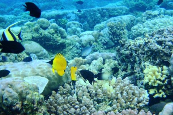 Taman Laut Nasional Bunaken, Manado, Sulawesi Utara - Ilustrasi/en.wikipedia.org