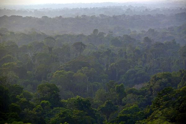 Hutan hujan tropis. - Bloomberg/Dado Galdieri
