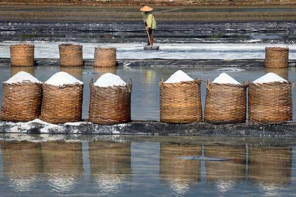Petani memanen garam di Desa Kedungmalang, Jepara, Jawa Tengah, Sabtu (19/8). - ANTARA/Yusuf Nugroho