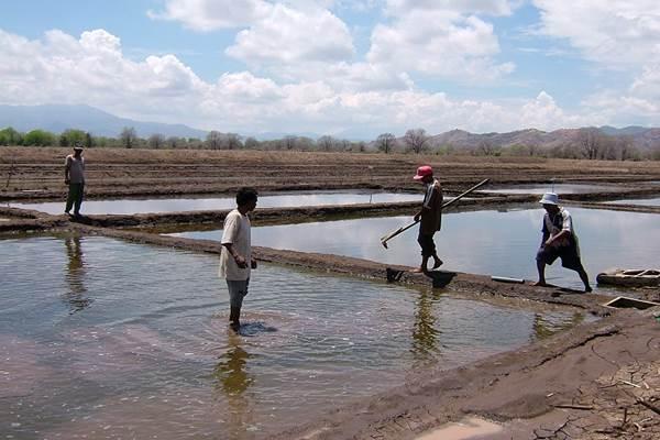 Petani garam di Kabupaten Nagakeo, NTT - Istimewa