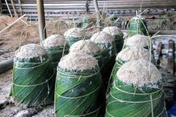 Sagu, sumber pangan dan energi yang penting di Papua. - Antara