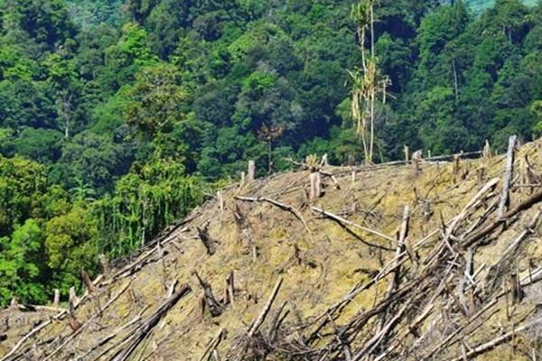 Hutan rusak - Antara