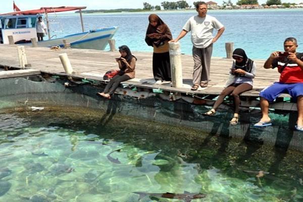 Wisatawan mengunjungi penangkaran ikan hiu di Perairan Pulau Pari, Kabupaten Administrasi Kepulauan Seribu, Jakarta - Antara