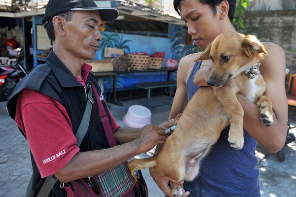 Vaksinasi Rabies di Bali - Antara/Nyoman Budhiana