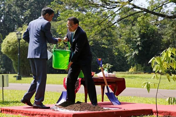 Presiden Joko Widodo (kiri) dan Perdana Menteri China Li Keqiang menanam pohon kamper (Drybalongs lanceolata) di halaman Istana Bogor, Bogor, Jawa Barat, Senin (7/5/2018). - Reuters/Beawiharta