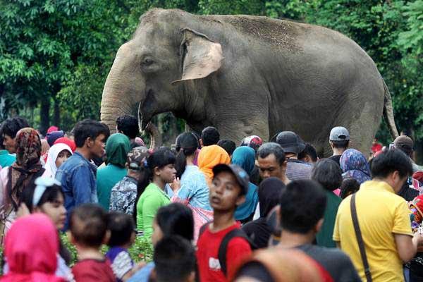 Wisatawan berlibur di Taman Margasatwa Ragunan, Jakarta, Senin (26/6). - Antara/Reno Esnir