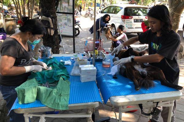 Vaksinasi, sterilisasi, dan kontrol populasi hewan pembawa rabies yang dilakukan Pemkot Denpasar bersama Yayasan Bali Animal Welfare Association. - Bisnis.com/Ema Sukarelawanto