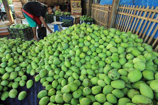 Pekerja memilih buah mangga di desa Kebulen, Jatibarang, Indramayu, Jawa Barat, Selsa (11/7). - ANTARA/Dedhez Anggara