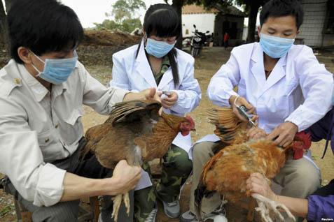 Flu Burung Mewabah di Malaysia, Karantina Unggas Diperketat - Ekonomi  Bisnis.com