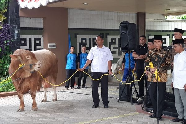 Presiden Joko Widodo menyerahkan hewan kurban berupa sapi kepada Pimpinan Pusat Muhammadiyah di kantor Pusat Dakwah Muhammadiyah, Jakarta, Kamis (23/8). - Bisnis/Yodie Hardiyan