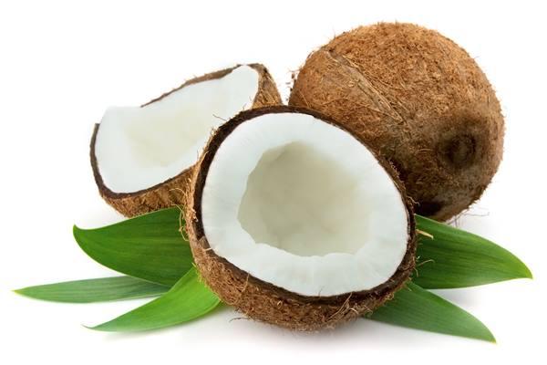 Ilustrasi kelapa. - Istimewa