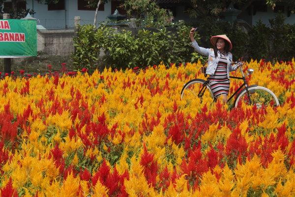 Pengunjung berswafoto dengan latar hamparan bunga Celosia di kebun bunga Telaga Nursery Prambanan, Dukuh Tlogo Lor, Desa Tlogo, Kecamatan Prambanan, Selasa (28/8). - JIBI