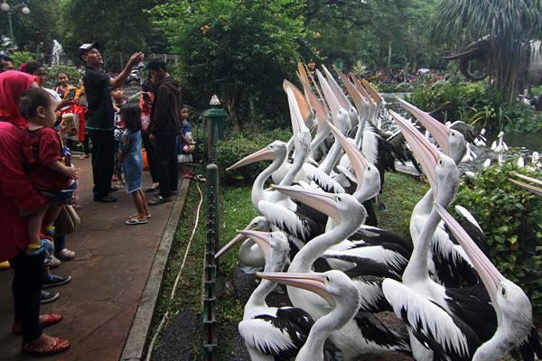Wisatawan mengamati burung Pelikan saat berlibur di Taman Margasatwa Ragunan, Jakarta - ANTARA FOTO/Reno Esnir