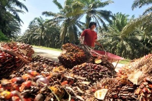 Buah kelapa sawit - Antara