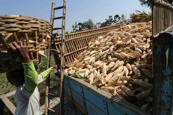 Buruh tani memindahkan jagung ke dalam bak truk usai dipetik di area pertanian Desa Paron, Kediri, Jawa Timur, Senin (6/8/2018). - Antara/Prasetia Fauzani